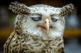 باشگاه خبرنگاران -احمقانه ترین تصاویر در دنیای حیوانات