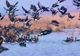 باشگاه خبرنگاران - موردی از مرگ پرندگان در مناطق زیستگاهی آذربایجان غربی مشاهده نشد