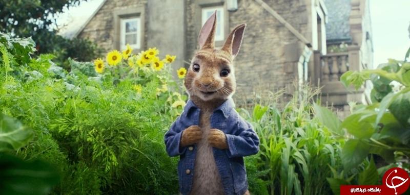 مارگارت رابی صداپیشه پیتر خرگوش شد+عکس