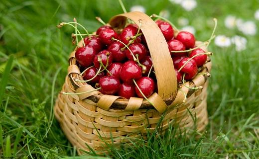 گیاهانی که نقرس را ضربهفنی میکنند/قویترین سلاحهای گیاهی برای مبارزه با نقرس
