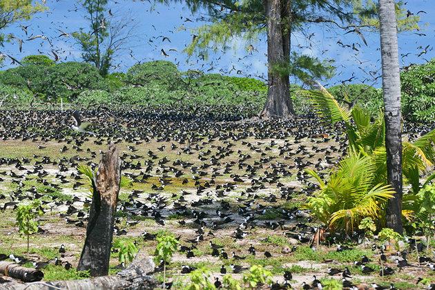 جزیره ای عجیب که ساکنین آن پرندگان هستند+ فیلم