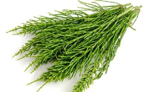 راز داشتن ناخنهایی زیبا و محکم/ ارمغان گیاهان دارویی برای تقویت ناخنها
