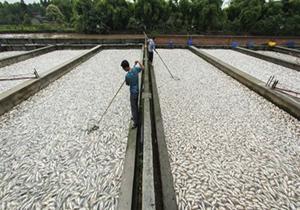 باشگاه خبرنگاران -لرستان، بزرگترین تولید کننده ماهی در بین استانهای غیر ساحلی + فیلم