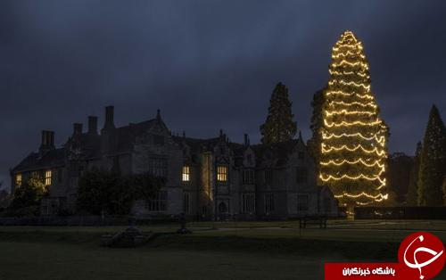 تصاویر روز: از تظاهرات ضد جنگ همزمان با سفر ترامپ به سئول تا تزئین درخت ۳۶ متری برای کریسمس