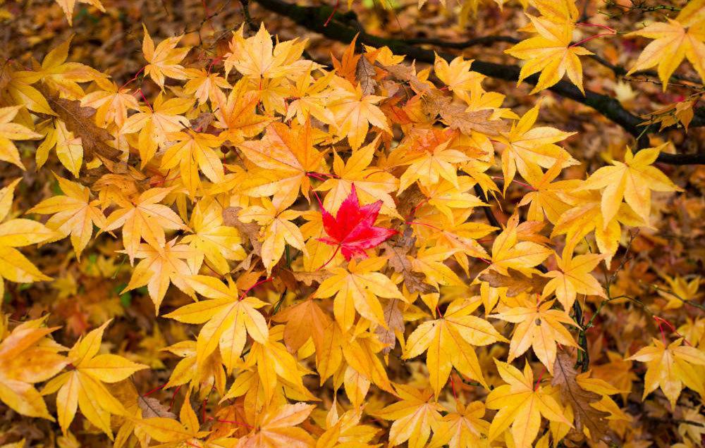 برگ های پاییزی بعد از بازیافت به چرخه مصرف باز می گردند