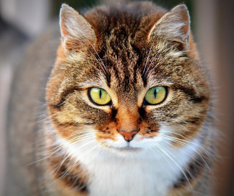 گربه ای که دزدی می کند!//یا گربه دزد حیله گرانه شکار جغد را می دزدد!+فیلم