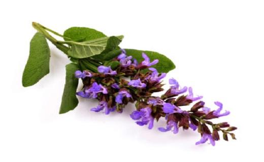 خُر و پُف را با روشهای خانگی به زانو درآورید/رهایی از خُر و پُف با گیاهان شفابخش
