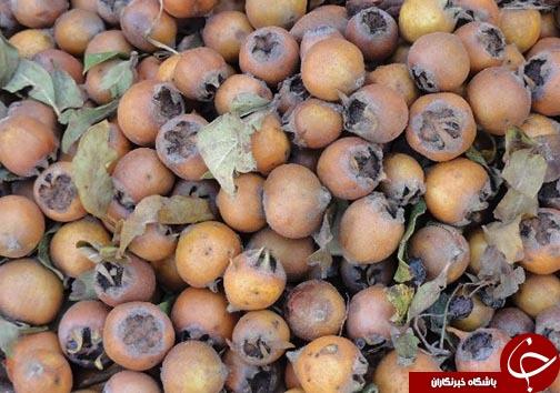 کسب درآمد روستاییان مازندرانی از فرآوری میوه های جنگلی