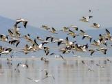 باشگاه خبرنگاران -شیوع آنفولانزای پرندگان در حیات وحش گزارش نشده است