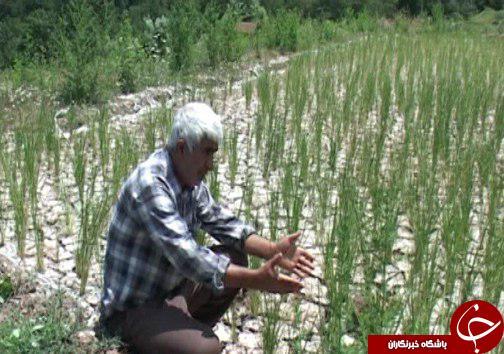 آبهای زیر زمینی مازندران در چنگال سودجویان