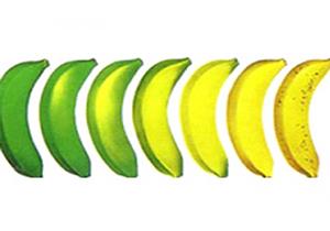 خوش رنگ شدن میوههای بازار به لطف گاز اتیلن! + فیلم
