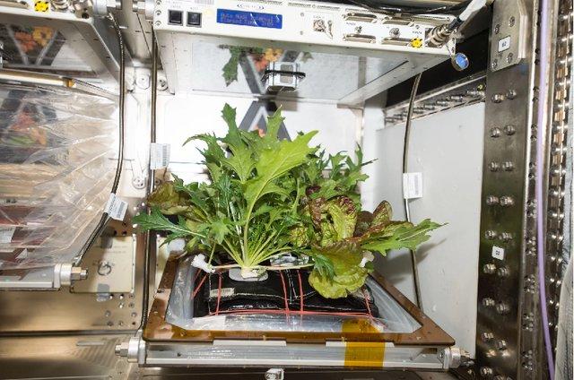 پرورش 3 گیاه خوراکی متفاوت در فضا