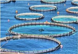 تجاریسازی تولید تور پرورش ماهی در قفس