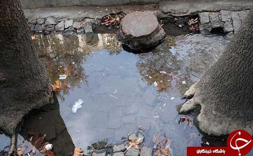 قتل سبز در خیابان ولیعصر/ پشتپرده جنایت در نیمه شب پایتخت