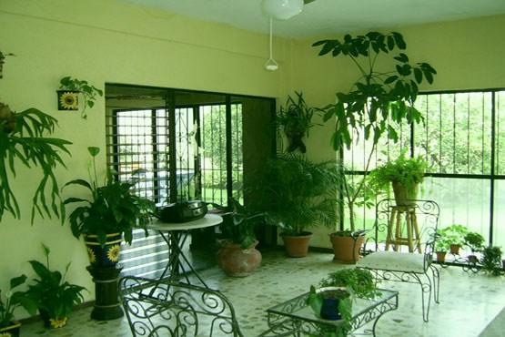 گیاهان خانگی که سموم را از هوای خانه می زداید