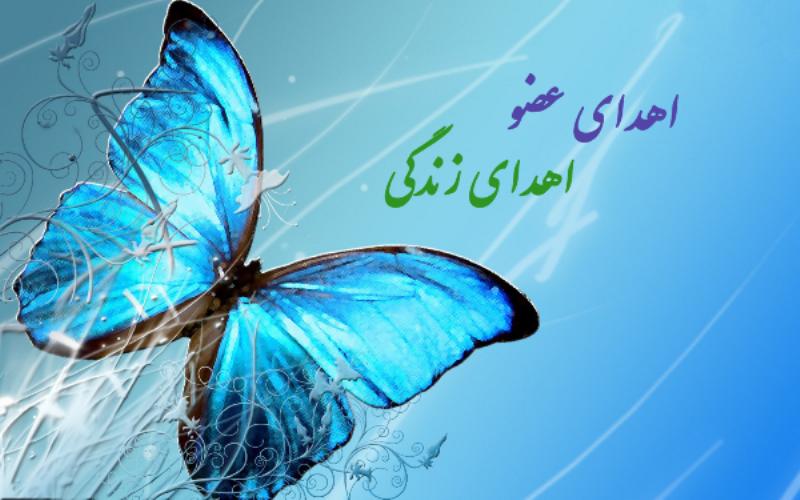 بانوی مرگ مغزی در مشهد به شش بیمار زندگی دوباره بخشید