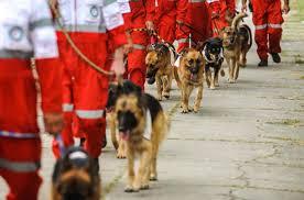 ۳۶ سگ شناسایی امداد به سرپل ذهاب اعزام شد