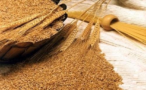 ادعای «خاک آلود بودن گندم» تکذیب شد