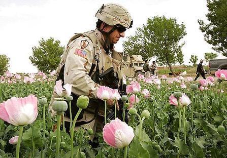 تولید مواد مخدر در افغانستان رکورد زد
