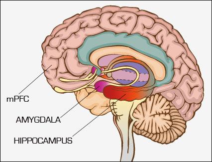 1-شبکهای از سلولهای عصبی عامل اصلی بروز سردرد درافراد۲-چرا سردرد دردناکترین درد دربدن است۳-حمله سلولهای عصبی به ناراحت کنندهترین خاطرهها عامل پنهان سردرد شدید۴-سردرد و میگرن؛ رنگ خطر فراموش نکردن تلخترین خاطرهها در مغز