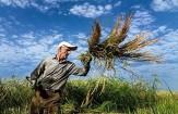 خرید توافقی برنج، راهگشای کنترل واردات و نوسان قیمت