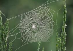باشگاه خبرنگاران - وقتی تارهای سست عنکبوت به محکمترین دژ تبدیل میشود + فیلم