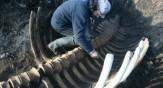باشگاه خبرنگاران -کشف لاشه ۵ متری یک جانور دریایی عجیب در روسیه+ تصاویر
