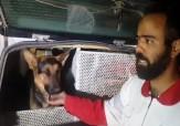 باشگاه خبرنگاران - نجات ۶ نفر از زلزلهزدگان توسط سگهای زنده یاب +فیلم