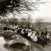 باشگاه خبرنگاران -جالبترین تصویر از بلوار کشاورز
