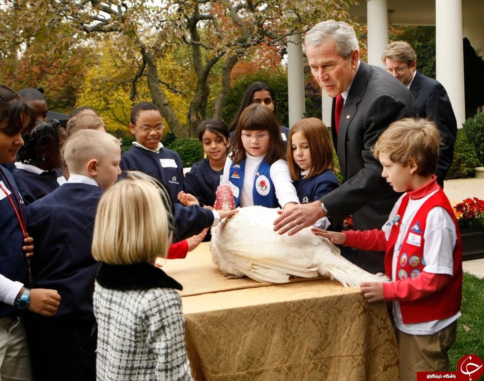 نگهداری از بوقلمونهای مراسم شکرگزاری کاخ سفید در یک هتل مجلل! + تصاویر