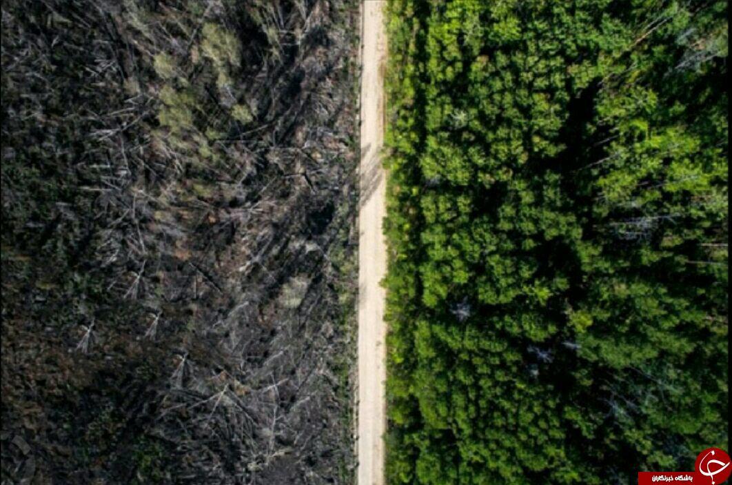جاده ای که ناجی جنگل شد + عکس