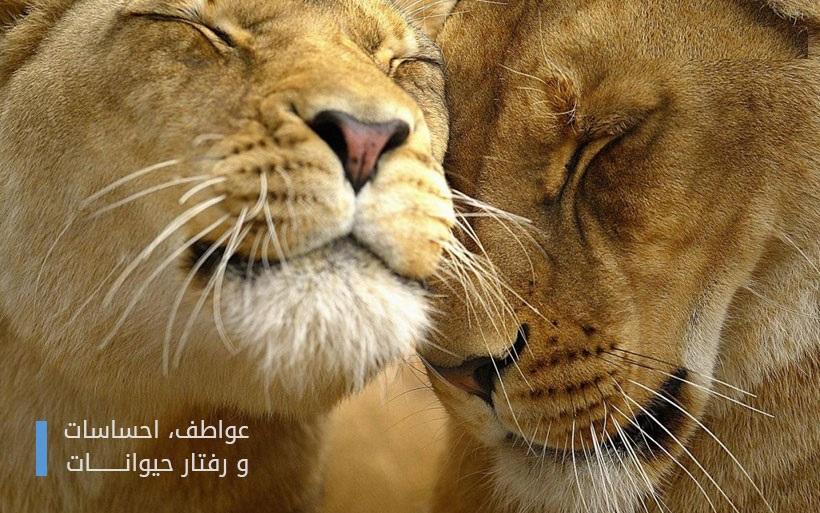 واکنش جالب و دیدنی حیوانات به محبت