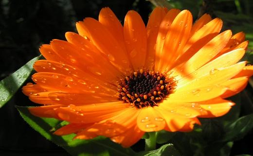نابودی تبخال با گیاهان دارویی/ قویترین سلاحهای گیاهی برای مبارزه با تبخال