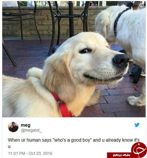 چرا سگها به چهرههای خندان علاقمند هستند؟ +تصاویر