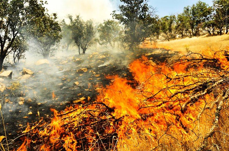 بروز حریق در جنگل های بخش زاگرس چرداول