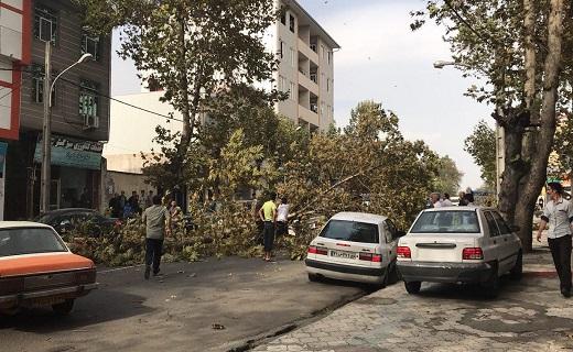 سقوط خطرساز درخت بر روی خودرو + فیلم