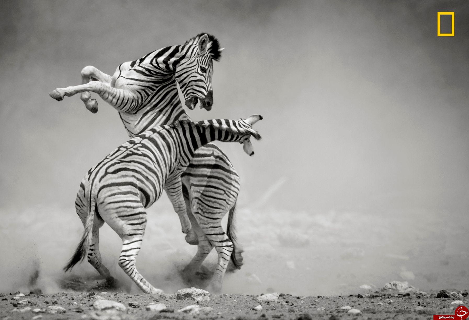 تصاویر خیره کننده  سال 2017 نشنال جغرافی