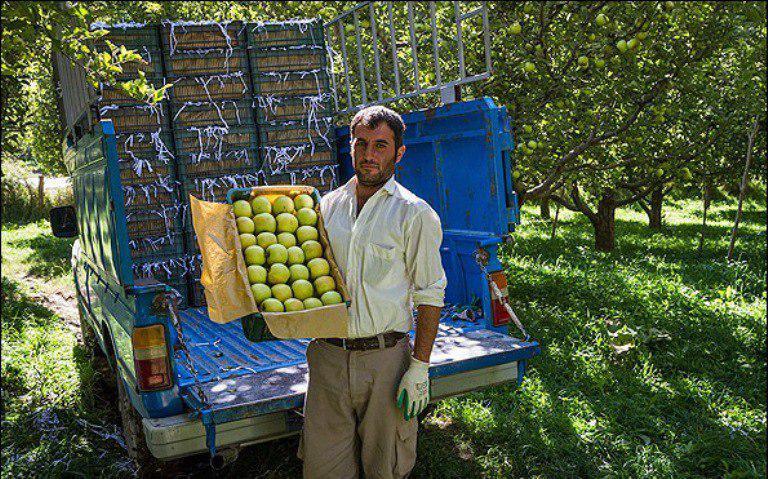 حاصل دسترنج کشاورزان کهگیلویه وبویراحمدی در جیب دلالان/ زخمی که هر سال سربازمی کند