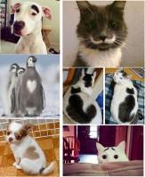 باشگاه خبرنگاران -طرح عجیب روی بدن حیوانات +تصاویر