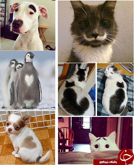 طرح عجیب روی بدن حیوانات +تصاویر