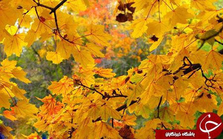 زیباترین پاییز دنیا در این شهر است+ تصاویر