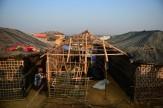 باشگاه خبرنگاران -سناتور آمریکایی: خشونتهای ارتش میانمار علیه مسلمانان تمام نشانههای پاکسازی قومی را دارد