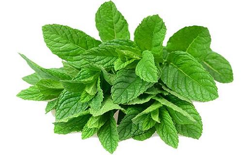 تسلیم کمکاری تیروئید در برابر گیاهان دارویی
