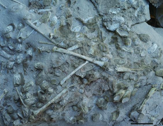صدها تخم متعلق به موجودات ماقبل تاریخ در چین پیدا شد