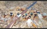 باشگاه خبرنگاران -8 نفر شکارچی متخلف در میاندوآب دستگیر شدند