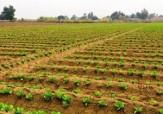 باشگاه خبرنگاران -بیش از ۶ میلیون هکتار از اراضی آبی کشاورزی با محدودیت رو به رو است