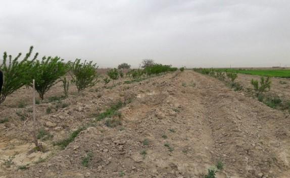باشگاه خبرنگاران -اجرای طرح بیابانزدایی در مناطق بیابانی استان سمنان/ایجاد جنگل دست کاشت