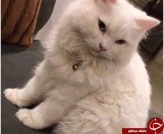 جایزه هنگفتی که زن عربستانی برای یابنده گربه گمشده اش تعیین کرد+عکس