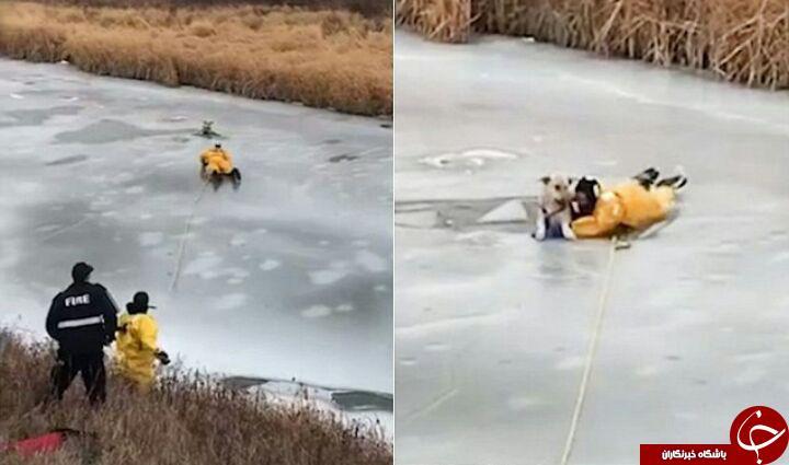 عملیات نفس گیر نجات یک سگ گرفتار شده در رودخانه یخ زده + فیلم///////////////////////