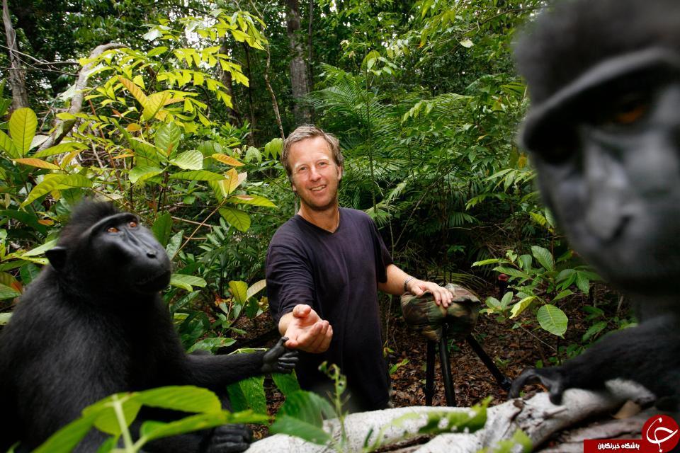 عنوان «شخص سال» برای یک میمون! +تصاویر